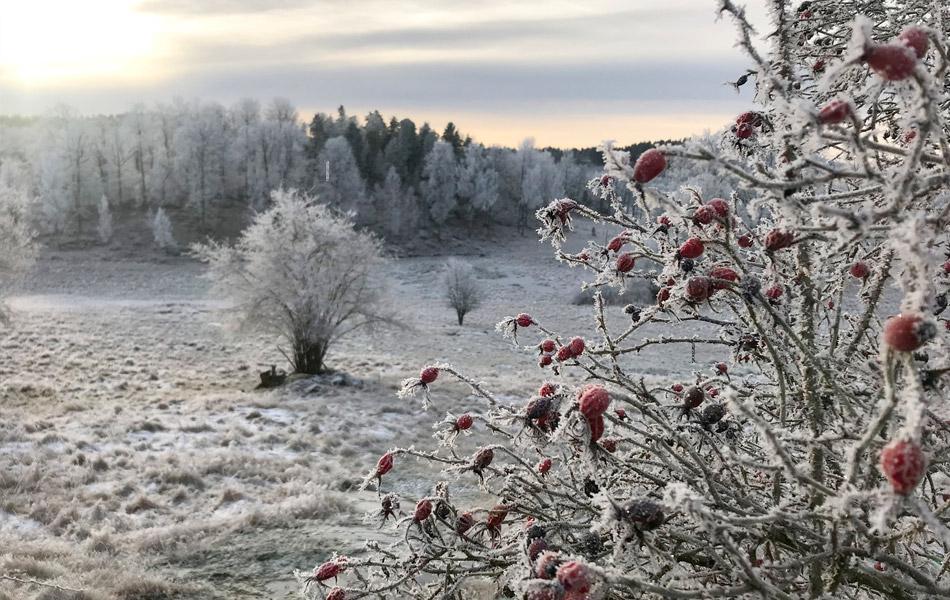 Liten Slider vinter 2